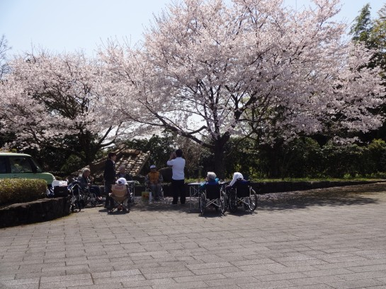 お花見バスハイク (118)