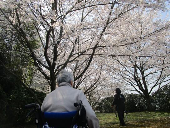 お花見バスハイク (16)
