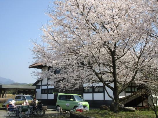 お花見バスハイク (130)