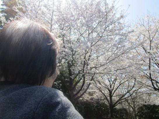 お花見バスハイク (67)